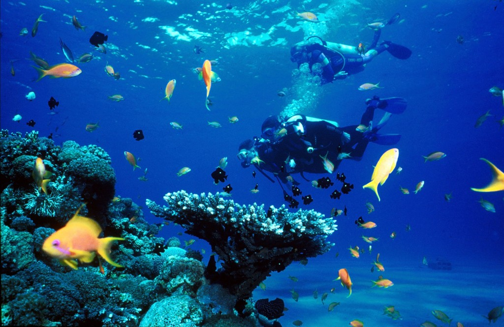 Görsel aqua-sport.com'dan alınmıştır.