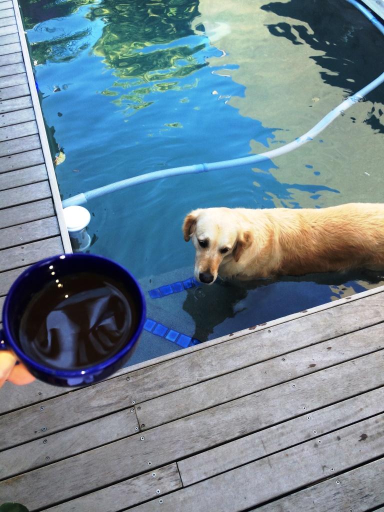 evde-köpek-besleme